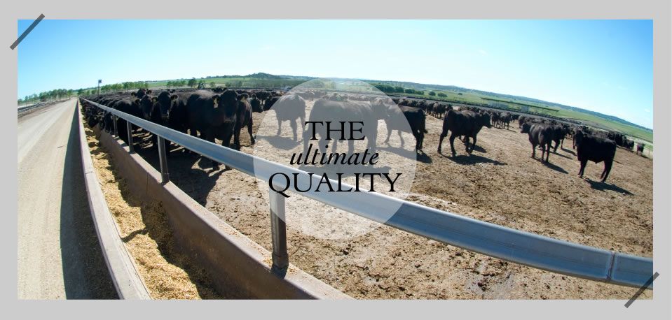 The ultimate Quality - Rangers Valley