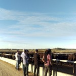 Rangers Valley feedlot, open skies