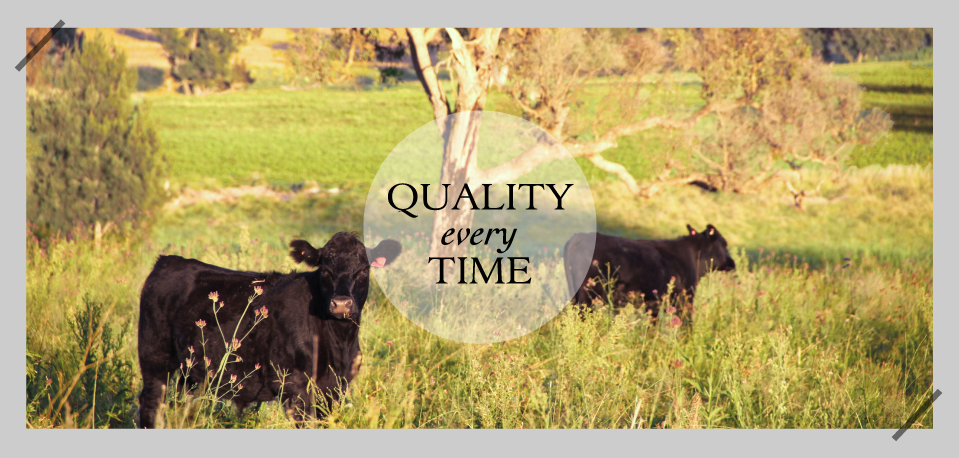 Quality every Time - Rangers Valley
